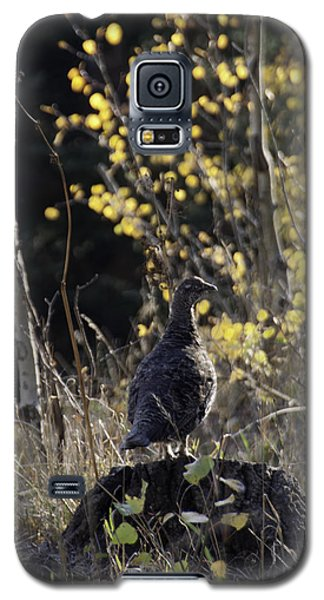 Partridge On Pine Stump Galaxy S5 Case by Daniel Hebard