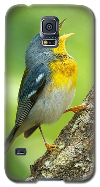 Parula Song Galaxy S5 Case