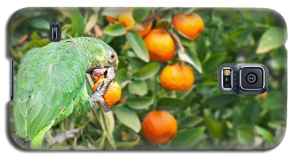 Pasadena Parrot Galaxy S5 Case