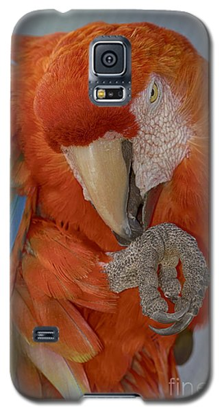 Pass The Hand Lotion Please Galaxy S5 Case by Anne Rodkin