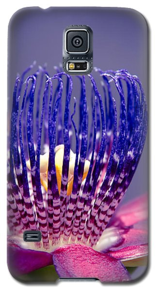 Passiflora Alata - Ruby Star - Ouvaca - Fragrant Granadilla -  Winged-stem Passion Flower Galaxy S5 Case