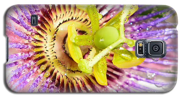 Passiflora The Passion Flower Galaxy S5 Case by Olga Hamilton