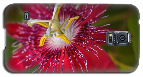 Galaxy S5 Case featuring the photograph Passion Flower by Jane Luxton