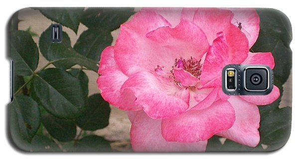 Galaxy S5 Case featuring the photograph Passion Pink by Jewel Hengen
