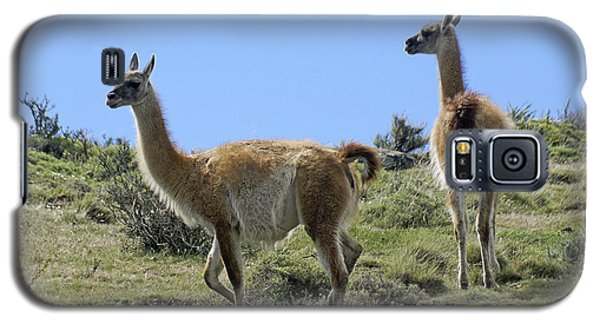 Patagonian Guanacos Galaxy S5 Case by Michele Burgess