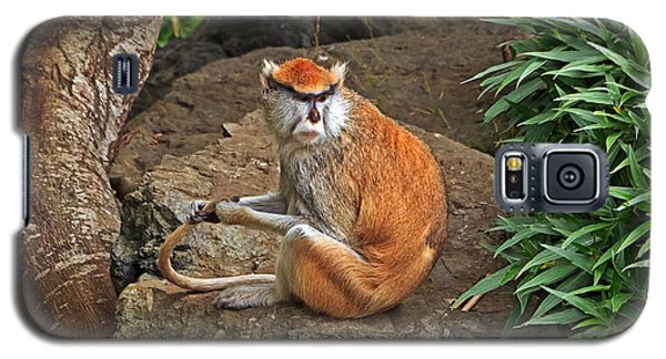 Galaxy S5 Case featuring the photograph Patas Monkey by Kate Brown