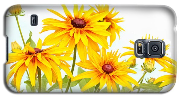 Patch Of Black-eyed Susan Galaxy S5 Case