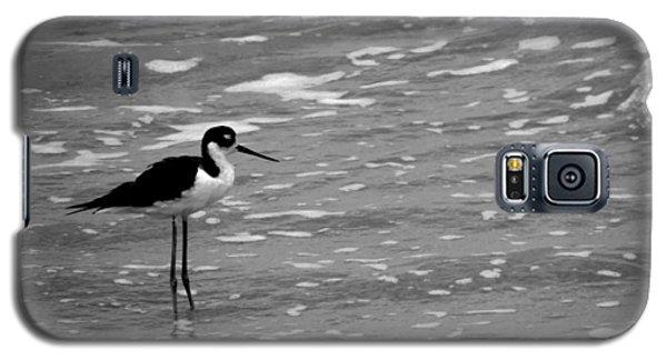 Patience Galaxy S5 Case by Tom DiFrancesca