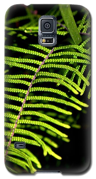 Pauched Coral Fern Galaxy S5 Case by Miroslava Jurcik