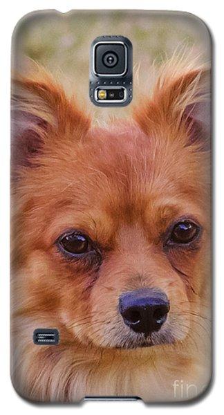 Paulanka Galaxy S5 Case by Deborah Smolinske