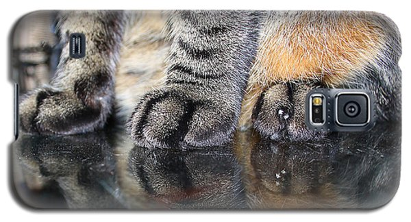 Paws Galaxy S5 Case