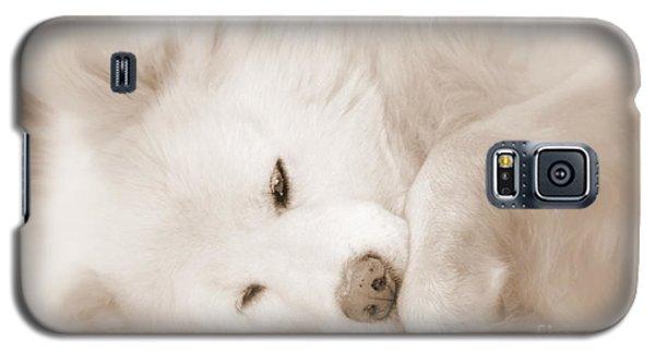 Pawsome Galaxy S5 Case