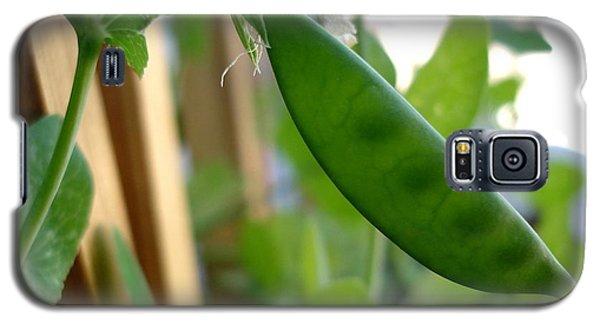 Pea Pod Growing Galaxy S5 Case