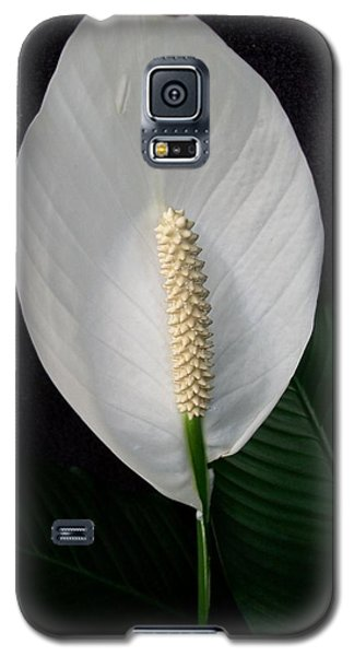 Peace Lily Galaxy S5 Case by Sharon Duguay
