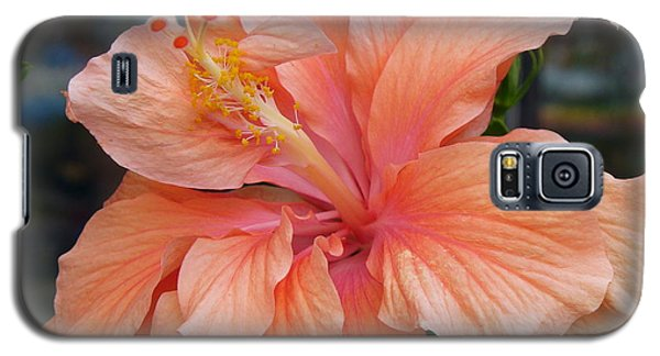 Galaxy S5 Case featuring the photograph Peach And Cream by Lingfai Leung