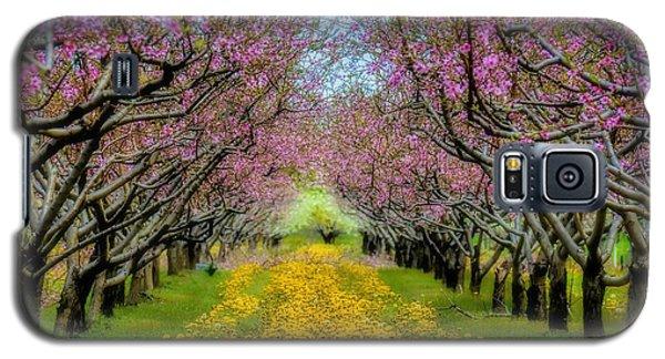 Peach Blossoms Dandelion Carpet Galaxy S5 Case by Henry Kowalski