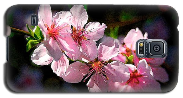 Peach Blossoms Galaxy S5 Case
