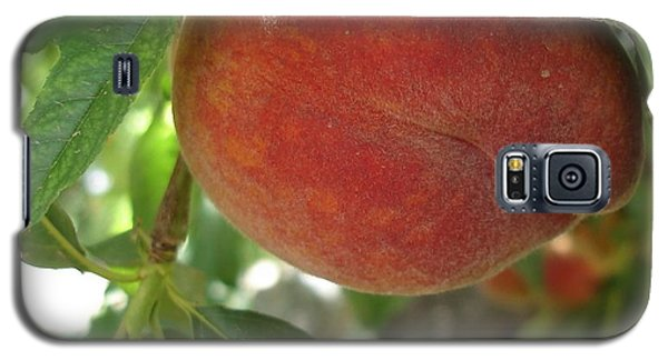 Peach Galaxy S5 Case by Kerri Mortenson