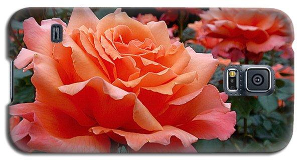 Peach Roses Galaxy S5 Case