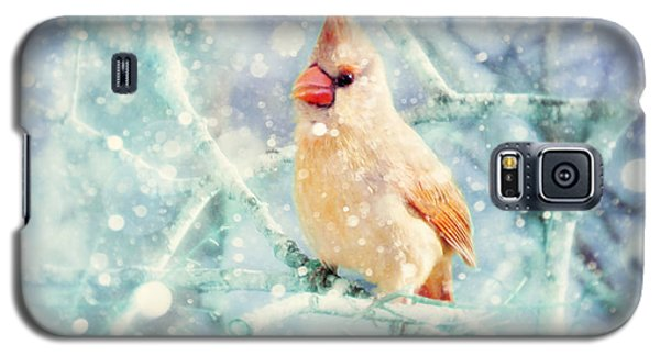 Peaches In The Snow Galaxy S5 Case by Amy Tyler