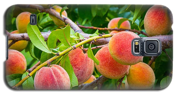 Peaches Galaxy S5 Case by Inge Johnsson