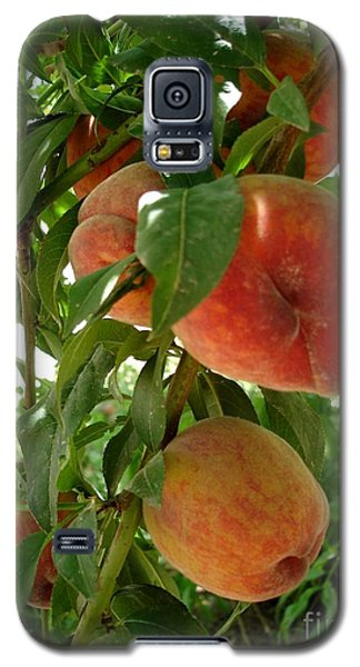 Galaxy S5 Case featuring the photograph Peaches On The Tree by Kerri Mortenson