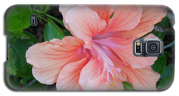 Peachy Hibiscus Galaxy S5 Case