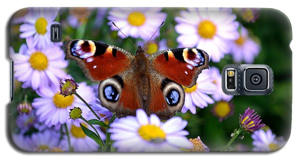 Peacock Butterfly Perched On The Daisies Galaxy S5 Case