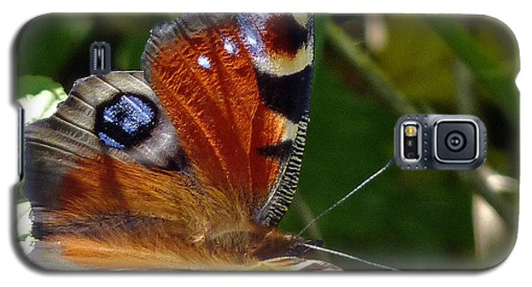 Peacock Butterfly Galaxy S5 Case