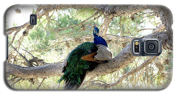 Peacock Galaxy S5 Case by Gina Dsgn