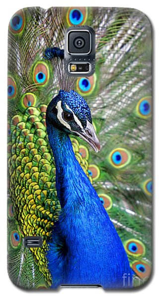 Peacock On Display Galaxy S5 Case by Lincoln Rogers