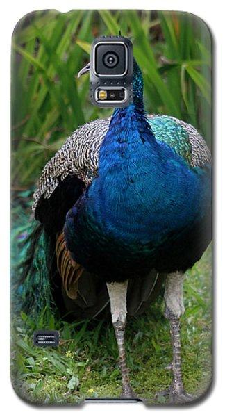 Peacock Galaxy S5 Case by Pamela Walton