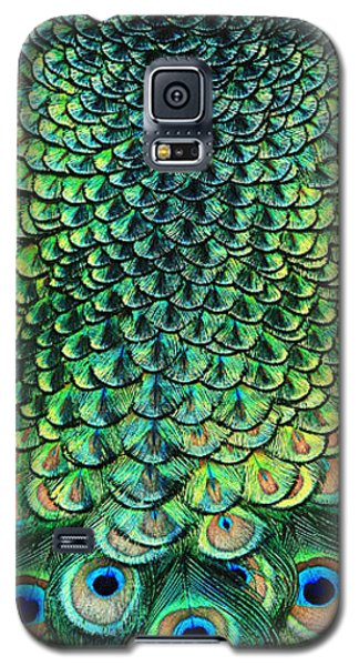 Peacock Pano Galaxy S5 Case by Clare VanderVeen