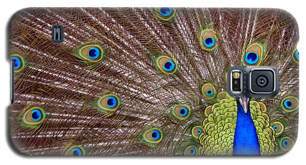 Galaxy S5 Case featuring the photograph Peacock Squared by Jaki Miller