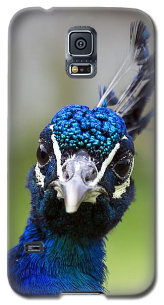 Peacock Stare Down Galaxy S5 Case