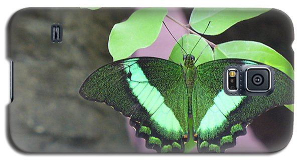 Galaxy S5 Case featuring the photograph Peacock Swallowtail by Lingfai Leung