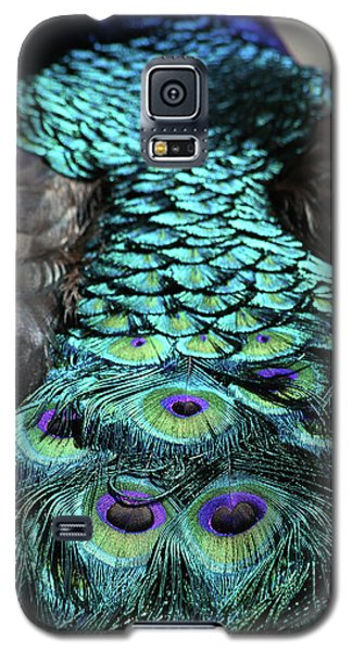 Peacock Trail Galaxy S5 Case by Karol Livote