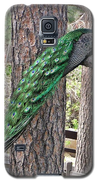 Peacock Watches The World Galaxy S5 Case by Diane Alexander