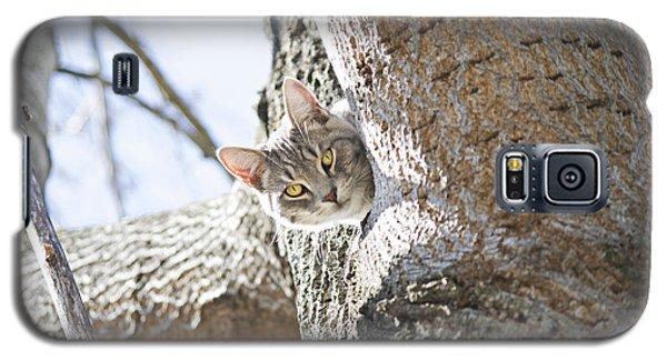 Peaking Cat Galaxy S5 Case