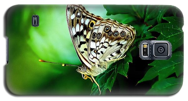 Pearly-eye Butterfly Galaxy S5 Case by Ed Roberts