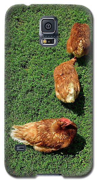 Pecking Order Galaxy S5 Case