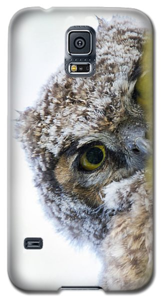 Peek A Boo Baby Owl Galaxy S5 Case
