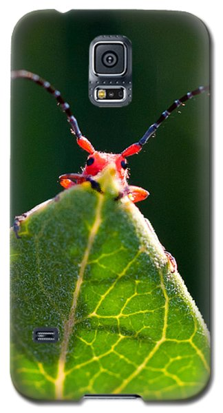 Galaxy S5 Case featuring the photograph Peek-a-boo by Janis Knight
