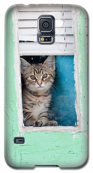 Peek-a-boo Galaxy S5 Case by Jean Haynes