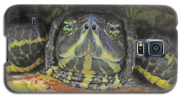 Galaxy S5 Case featuring the photograph Peek A Boo by Judith Morris