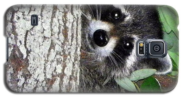 Peek A Boo Raccoon Galaxy S5 Case