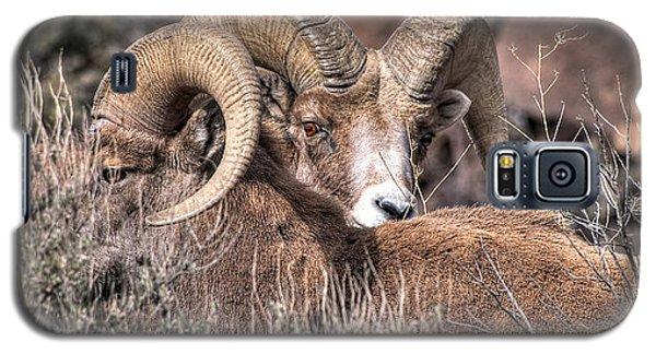 Peekaboo Bighorn  Galaxy S5 Case