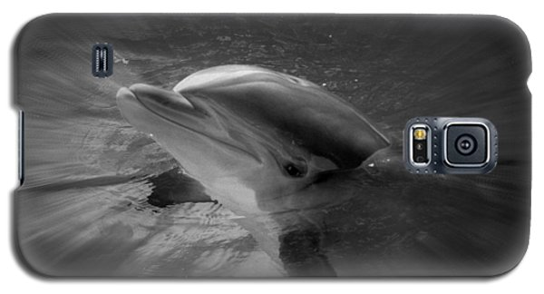 Galaxy S5 Case featuring the photograph Peeking Dolphin by Amanda Eberly-Kudamik