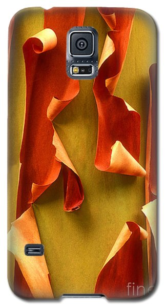 Peeling Bark Pacific Madrone Tree Washington Galaxy S5 Case