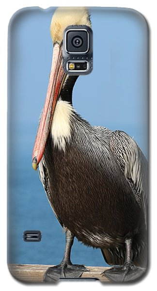 Pelican - 3  Galaxy S5 Case